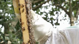 Bee keeper looking at Honey bee macro footage of bee hive
