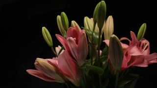 Flower timelapse blooming Lily bouquet flowers