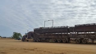 Live Exports Road Train Truck at Cattle Yard