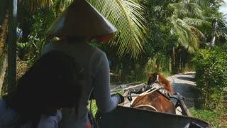 MEKONG DELTA, VIETNAM - 2015: traditional Vietnamese lifestyle horse and cart