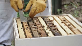 Pulling out Honey bee macro footage of bee hive and apiarist beekeeper