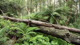 Rainforest - Australian Landscape