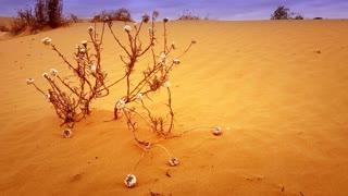 Red Desert Sand Dune Landscape
