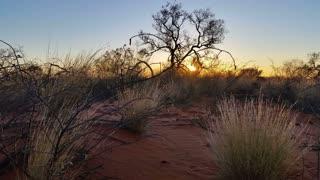 Sunset Outback Australia Landscape Red Desert Sand and Dry Arid Grasslands