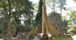 Ta Prohm temple of Angkor Wat Cambodia ancient stone ruin temple