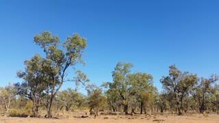 Termite Mounds Australian Outback Landscape
