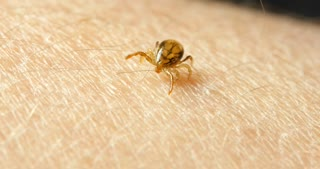 Tick insect on arm