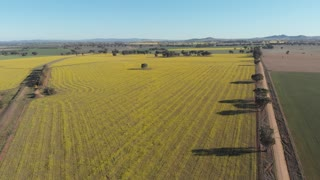 Agricultural crop field farming landscape rural Australia Aerial footage