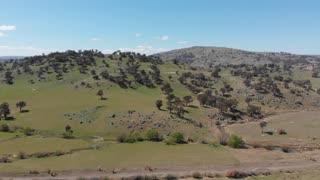 Agriculture Australia livestock grazing rural farmland - Aerial drone shot