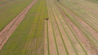 Combine harvester Canola field crop harvesting agricultural - Aerial footage