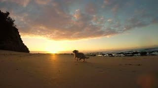 Cute dog chased on beach low angle camera slow motion at sunrise or sunset