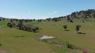 Dairy cattle farmland agriculture rural country Australia - Aerial drone shot