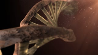 Damage to mitochondria DNA and RNA chromosome genetic disorder