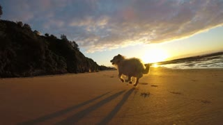 Dog running on beach with ocean sea background at sunrise slow motion