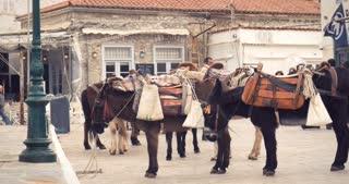Donkeys - Greek island of Hydra Saronic Islands in the Aegean Sea