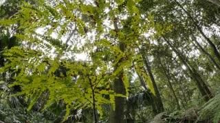 Fern in rainforest undergrowth leaf litter nature ecosystem