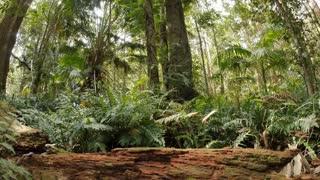 Ferns in rainforest undergrowth leaf litter nature ecosystem