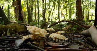 Forest floor mushroom fungi closeup