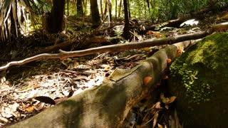 Fungus, fungi or funguses rainforest jungle - dolly shot