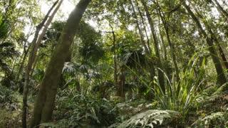 Green forest vegetation natural rainforest environment