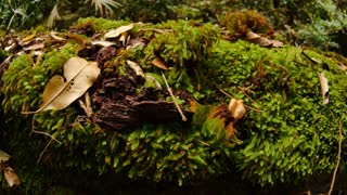 Green moss covered log in wild natural rainforest environment