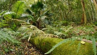 Green scenic jungle Rainforest Australian Landscape