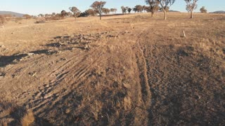 Kangaroos in outback Australia dry bush farming country aerial drone footage