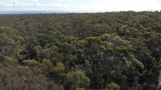 Low tree top canopy forest fly over Australia aerial footage