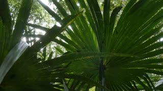 Lush wild green rainforest natural environment