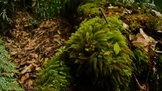 Moss on rain forest log in jungle undergrowth