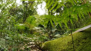 Natural environment lush Rainforest Australian Landscape