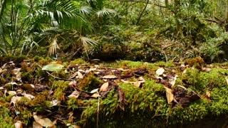 Natural green lush moss in wild green rainforest natural environment