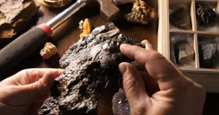 Paleontologist studying fossil from prehistoric time
