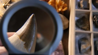 Paleontology excavation research of ancient shark tooth