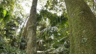Rain forest tree canopy sunlight though foliage