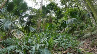 Rain forest undergrowth dolly shot of wild natural environment