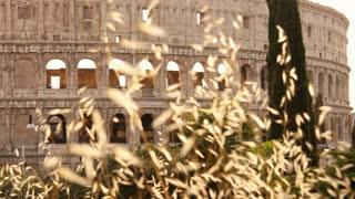 Rome Italy - Colosseum ruin of the former Roman Empire