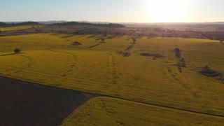 Rural Australia Canola field crop farming agricultural landscape - Aerial