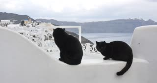 Santorini Greece - Cats at the village of Oia in Greek Islands Aegean