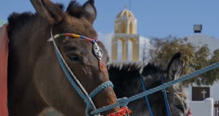 Santorini Greece - Donkey in the village of Oia in Greek Islands Aegean