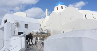 Santorini Greece - Donkeys at the village of Oia in Greek Islands Aegean