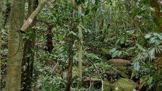 Temperate Rainforest Australian Landscape