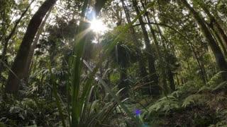 Wild rainforest ecosystem in natural lush forest