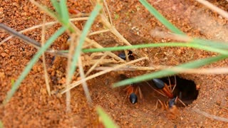 Worker Ants Insect Nest 1