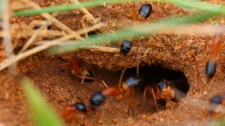 Worker Ants Insect Nest 2