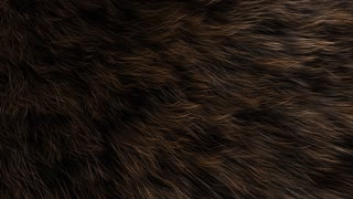 Animal fur close up, animal, decoration, detail, fluffy, hair.