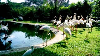 Flamingos, zoo, visit, nature, animal, bird.