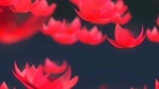Lotus flower falling animation