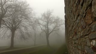 Old Historical Ancient Castle Walls and Forest in Misty Foggy Day