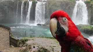 Parrot in Front of the Waterfall in Wild Nature